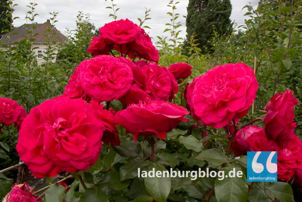Ladenburg_Gartenlust_130624_007-7223