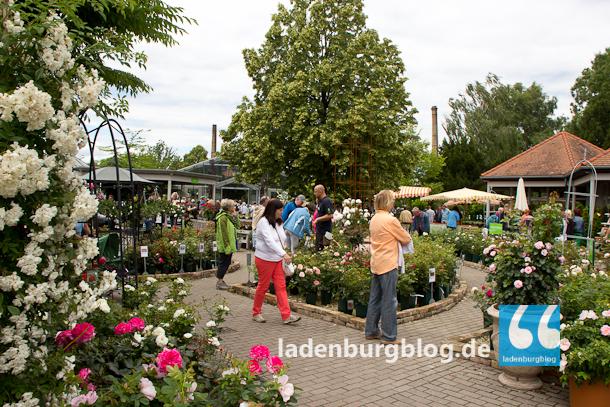 Ladenburg_Gartenlust_130624_007-7226