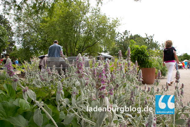 Ladenburg_Gartenlust_130624_007-7228