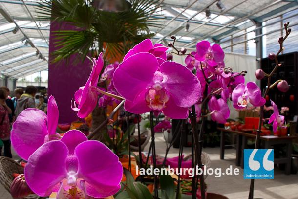 Ladenburg_Gartenlust_130624_007-7231